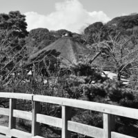 横浜 三渓園♪