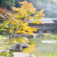 鎌倉 晩秋の庭園