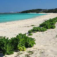 荒涼の石狩浜と南の海