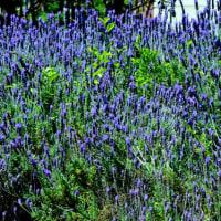 長居公園の庭の花