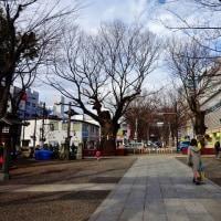 いい天気でした! 北米百年桜(Ⅰ)