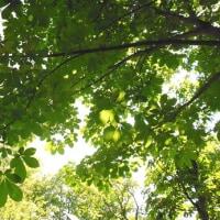 都立武蔵野公園を散策。