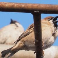 鳥たちのパフォーマンス