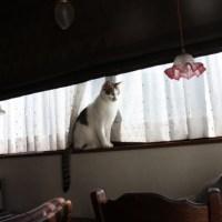 猫は目線を合わせない