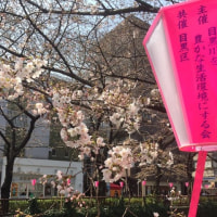 横芝光町のイチゴ農家IN中目黒桜まつり^0^