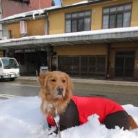 雪遊び旅行⑨
