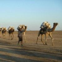 エチオピアの旅は終わりました