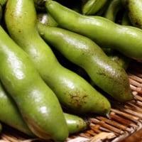 家庭菜園 空豆・玉葱・インゲン・キヌサヤなど収穫