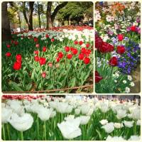 横浜公園花盛り