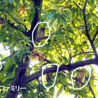 松本城のかわせみと野鳥たち
