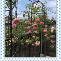 coco🐶花盛り