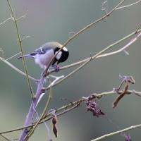 前田公園の小鳥達