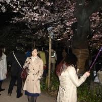 夜桜見物 See to Cherry in the night
