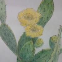 厳しさを サボテンの花 教えける