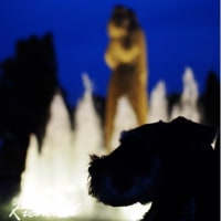 夕暮れのお散歩・・・山下公園の銀杏並木
