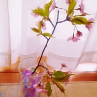 河津桜と初鰹