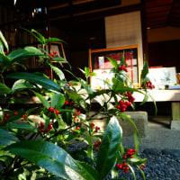 『季節の花』 千両
