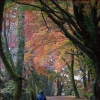 絶景のトイレ<正ちゃんの紅葉狩り9>