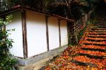 京都紅葉・金蔵寺 2015 その2