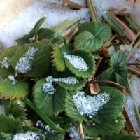 雪の植物園