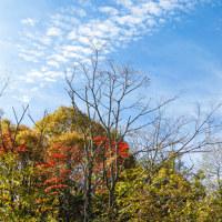 秋の日の写真集