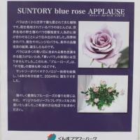 青い薔薇、APPLAUSE