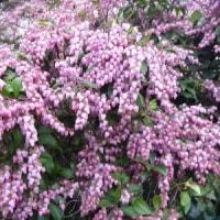 平和への希い732 「世の中に絶えて桜のなかりせば・・・」