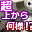 超上から目線で何様だよ!?なペッパーくんは高田純次並みの適当さで人生相談する!!