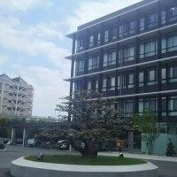 半田市役所と市民病院と それと 木