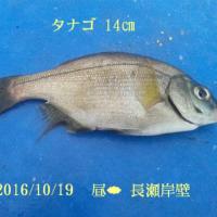 笑転爺の釣行記 10月19日☁ 浦賀・長瀬