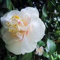 春一番が 吹き荒れて (*_*; 花粉が 飛散