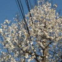 春に三日の晴れなし (*´∇`*)