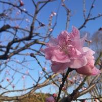 4月のお花とグルメ