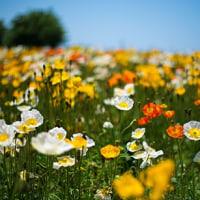 心にお花を咲かせよう 育てよう