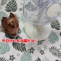 扇風機さん登場!!