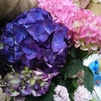 7月25日 明日の誕生花・ゆかりの花 花言葉は?(*^O^*)☆