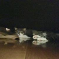 我家の愛猫達