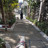 不思議階段や犬がテイスティング?