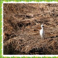 木曽川の鳥