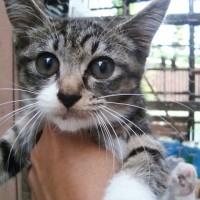 明日6/25は松山市駅前広場にて「猫の譲渡会」開催です。