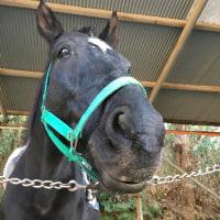 馬の仕事につくために アニベジ奮闘記 エピソード219