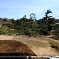 河津桜と冬の特別拝観