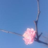 枯れ木に花を。