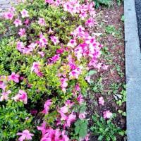 ■ 花の道/るんるん