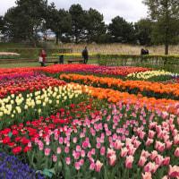 キューケンホフ 公園