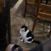 港町小樽で、素敵な猫に出逢えるBARがあります♡♡♡