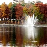 桃山台・春日大池に「アメリカヒドリ」が渡って来ています。