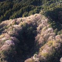 千葉のナメゴ谷