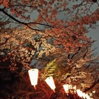 2017年の桜と・・姫奈の検査結果