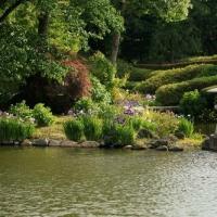 緑水苑のアヤメ